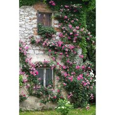 secret garden ❤ liked on Polyvore featuring backgrounds, pics, pictures and photos