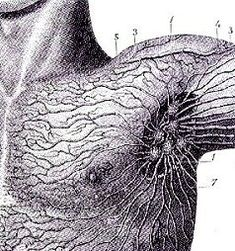 1000+ ideas about Lymph Nodes on Pinterest