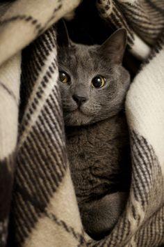 O meu gatinho♡♡♡