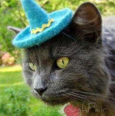 Cinco de Mayo kitty...