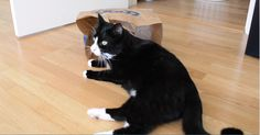 Cute Cats and a Paper Bag. Fivel and Soteline likes paper bags. Paper bags is like a magnet to the two cats. When a new paper bag hits the floor it is surrounded by the cats within seconds. Both cats want two relax inside the bag, it often results in some arguing.