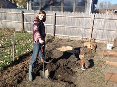 I'm using the three permaculture ideas (care for the earth, care for people, and abundance) to prepare the soil for next years garden. I am marrying the ideas of a miniature hugelkultur beds,  keyhole garden idea, with back to eden mulch technique.  The kids are having so much fun too!
