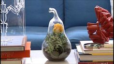 Making Your Own Terrariums