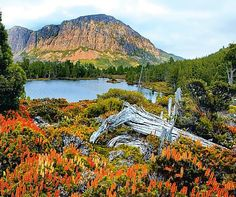 Walls of Jerusalem National Park, Tasmania  Part of the Tasmanian Wilderness World Heritage Area, Walls of Jerusalem is roughly in the centre of the island state and about 15 kilometres east (as a number of indigenous birds might fly) of Cradle Mountain-Lake St Clair National Park.