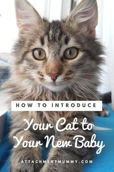 Cat Care Tips Babies and pets - the best way to introduce your cat to your new baby. How To Introduce Cats, How To Introduce Yourself, Lifehacks, Winnie The Pooh, Sick Cat, Attachment Parenting, Gentle Parenting, Parenting Books, Parenting Advice