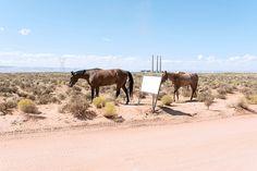 page, arizona, 2014 Arizona, Horses, Explore, Animals, Places To Visit, Animales, Animaux, Horse, Exploring