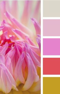 petalled color