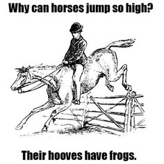 Why can horses jump so high? #equestrian  hahahah- only horse ppl get it-horses have a part in their hooves called the frog-