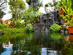 This pond is mostly still, with a wide waterfall on one side, spilling narrow streams of water down the rock faces. Large leafed plants give this space a tropical atmosphere.