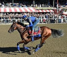 Connections of American Pharoah, Keen Ice Remember 2015 Travers Travers Stakes, Triple Crown Winners, American Pharoah, Sport Of Kings, Thoroughbred Horse, Everything Funny, Racehorse, Horse Racing, Crowd