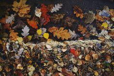 Autumn Leaves. Autumn Leaves, Painting, Art, Weather, Fall Leaves, Painting Art, Autumn Leaf Color, Paintings, Kunst