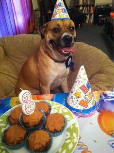 happy birthday pooch images 17 (1)