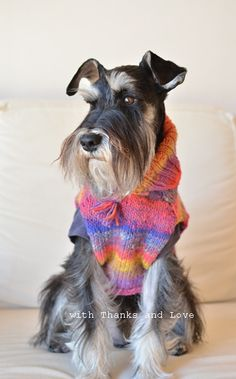 with Thanks and Love what an adorable mini Schnauzer