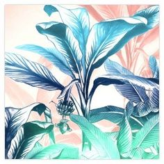 Close Banana Tree Canvas Art II