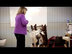 Finding Dog Training Solutions by Breaking the Rules