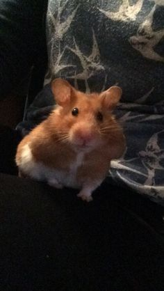 Bailey the hamster :)