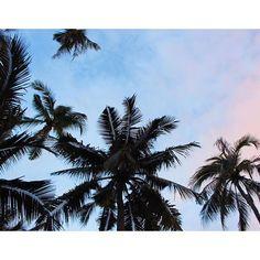 【sayuuuumin】さんのInstagramをピンしています。 《. 雨スタートの10月🙄☔️ そしてまた台風直撃の予報😂 頭痛ばっかりなのは、雨が多いせいかな💭💭 . 不健康の極みの私は、ジムにでも行って体力作りしようか迷い中😎 . #sky#palmtrees#bluesky#cebu#phillipines#asia#resort#tropical#summer#beach#trip#happy#l4l#like4like#instagood#instalikes#パームツリー#ヤシの木#空#東南アジア#南国#リゾート#海#セブ島#ビーチ#アジアリゾート#旅行》