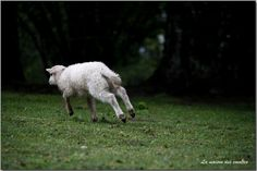 photographie bastian alix