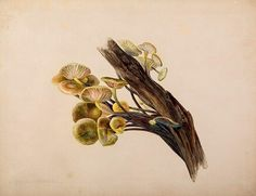 Beatrix Potter, Mycologist: The Beloved Children's Book Author's Little-Known…