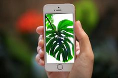 Leaf Background, Do You Like It, Photo Backgrounds, Palm Trees, Backdrops, Valentines, Iphone, Digital, Unique Jewelry