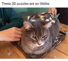 20 Cat Memes That Are 100% Funny