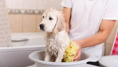 Dog Grooming Prices: How Much Does It Cost to Groom a Dog? - Top Dog Tips