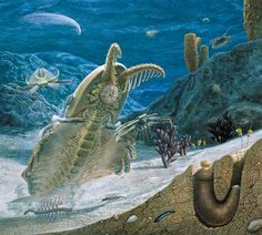 An evolutionary burst 540 million years ago filled the seas with an astonishing diversity of animals.