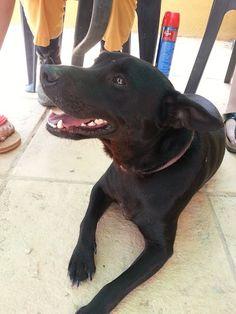 Este perro se llama Lucas, es un cruce mediano pequeño de casi 6 años. Fue dejado por su familia en el refugio porque, como le pasa a muchos perros, ya no querían que formara parte de su familia argumentando una escusa tonta. Lucas lleva 3 años esperando una nueva familia y nadie se ha fijado aún en él. Es un perro social con otros perros, con gatos no va muy bien y con niños no lo sabemos. CONTACTO: animalrescue.org@gmail.com - 615 690 622 - 646 659 511