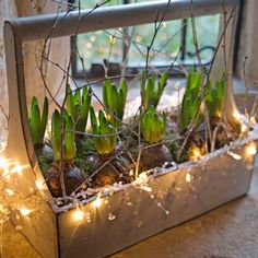 urn plant boxes full of ready to bloom bulbs into a welcoming window sill display by attaching a string of twinkling fairy lights around the rim and letting them sparkle as dusk turns to evening.