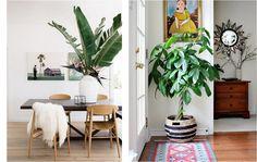 30 ideas de inspiración para decorar con macetas y plantas de interior