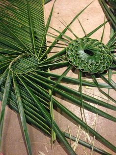 Palm frond hat making session for a friend