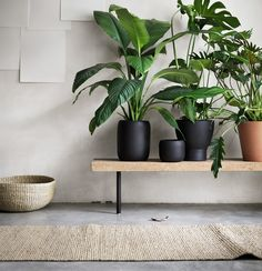 Houseplants may also add moisture to dry air due to heat and ac. Indoor plants aren't only beneficial for your wellbeing but they have psychological advantages too. Green Plants, Potted Plants, Indoor Plants, Plants On Balcony, Greenhouse Plants, Indoor Gardening, Tropical Plants, Cactus Plants, Sinnerlig Ikea