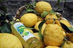 Les citrons et le Limoncello : emblèmes gastronomiques de la Ligurie.