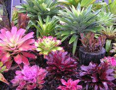 Bromeliad Garden Bromeliads In Australia XIII Balinese Garden, Bali Garden, Lawn And Garden, Florida Landscaping, Tropical Landscaping, Garden Landscaping, Florida Gardening, Landscaping Images, Tropical Flowers