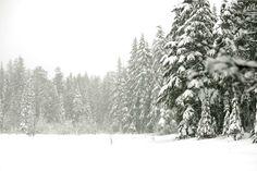 Mt Hood - photo by Stephanie Congdon Barnes