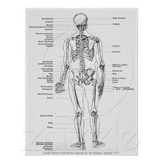 Cru - mâle marqué de vue de dos de squelette posters de Zazzle.fr