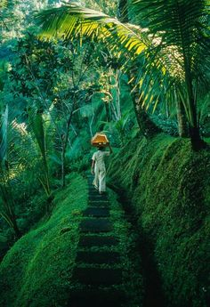 Forest journey. Bali http://www.top-sales-results.com/