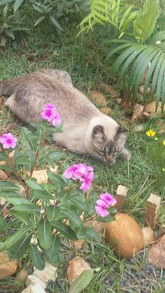 Nala adora florzinha