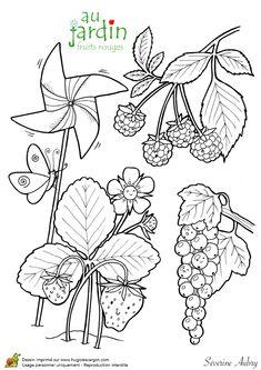jardinage fruits rouges