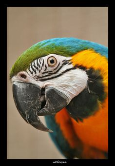 Rocky - Blue and Gold Macaw.. wow looks just like Toby..
