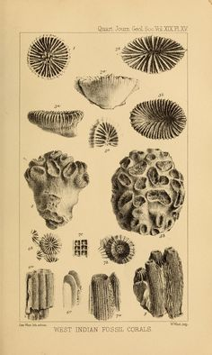 West Indian Fossil Corals, from The Quarterly journal of the Geological Society of London, 1863