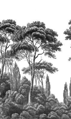 Papier peint Pins et Cypres 2 - Ananbô Tree Drawings Pencil, Interior Wall Colors, Chinoiserie Wallpaper, Tree Artwork, Tropical Art, Landscape Drawings, Realistic Drawings, Environmental Art, Art Challenge