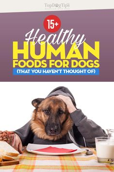 Pet Vaccinations To Keep Your Pet Healthy – Animal Health Info Pet Insurance Reviews, Dog Insurance, Insurance Quotes, Health Insurance, Dog Health Tips, Pet Health, Dog Treat Recipes, Dog Food Recipes, Can Dogs Eat Watermelon