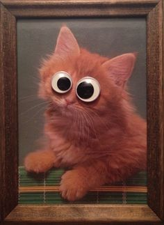 Fact: Googly eyes make everything better. This would be great for laughs at the art table. Googly Eye Crafts, Eye App, Gadgets, Girl Beanie, Googly Eyes, All About Cats, Creature Feature, Teds Woodworking, Holidays And Events