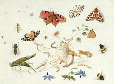 Painting - Study Of Insects And Flowers by Ferdinand van Kessel