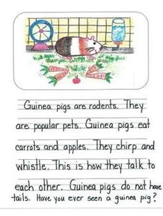 First Grade Informational Writing Mentor Texts:  Guinea Pigs, Birds and Bees