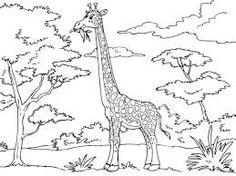 La Chachipedia Jirafas para colorear dibujos coloreados para