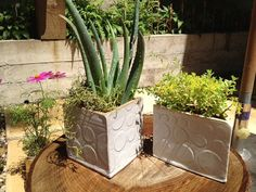 Square White Bubble Herb and Flower Planter by persimmonstreet, $25.00