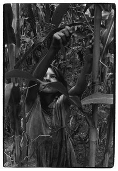 Girl in cornstalks, Cornett Family, Eastern Kentucky, 1964. Photo by William Gedney.  [Duke Digital Collections]