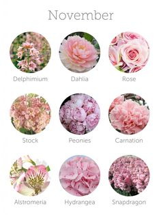 Flowers that are in season during November. This list is fabulous for knowing which flowers are in season for your wedding month! I love, Dahlia, rose, peonies, lisianthus and carnations.